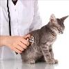 Ветеринарные клиники в Калязине